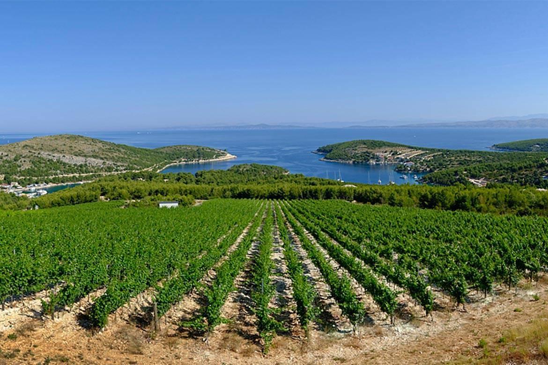 wine tasting hvar stag croatia 2